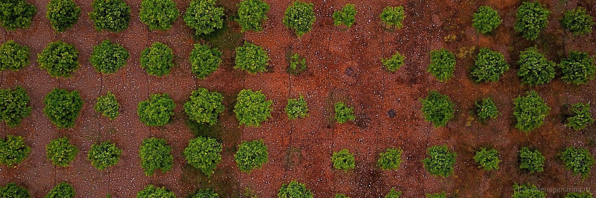 Оливковые рощи – зеленое золото Андалусии