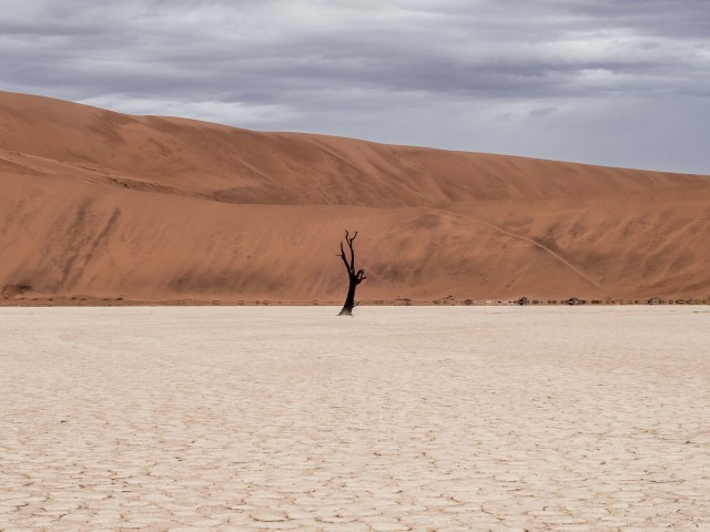 Кинематографическая пустыня Европы