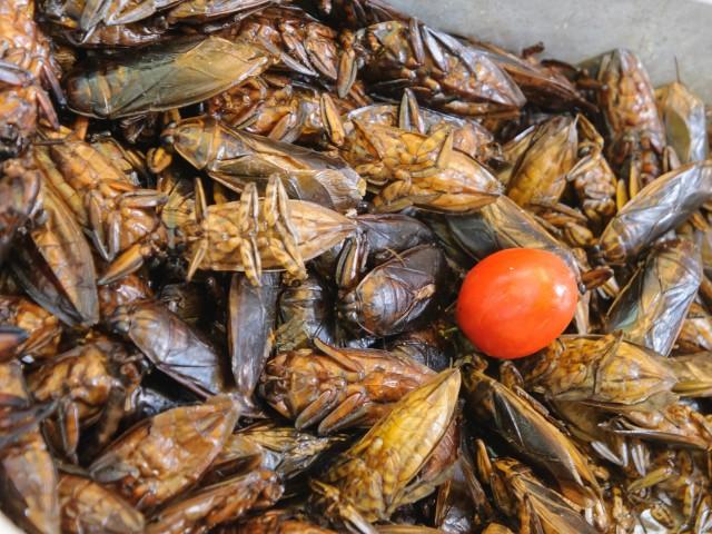 Блюда из насекомых: на десерт после хамона