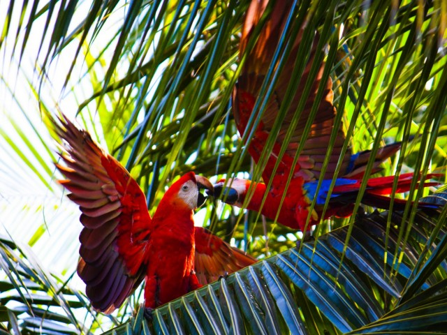Зоопарк Loro Parque: комфортное обитание под знаком попугая