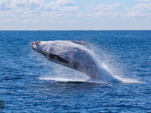 На свидание с китами и дельфинами